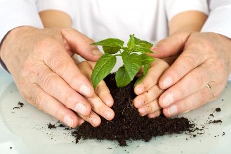 Photo pour Old and young hands protecting a plant - environmental education concept - image libre de droit
