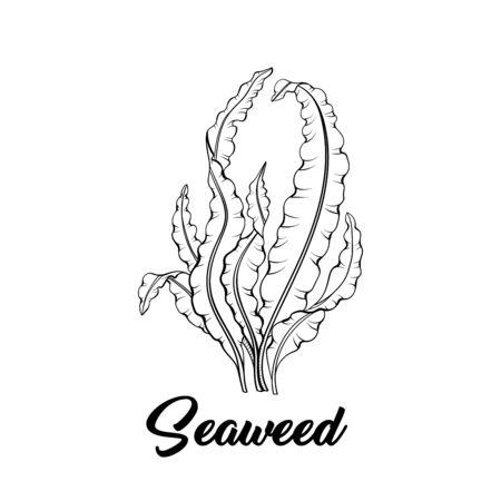 Illustration pour Seaweed black and white vector illustration. Tropical underwater flora, sea bottom plant freehand sketch. Aquarium decoration. Laminaria, algae, healthy food ingredient. Marine products store - image libre de droit