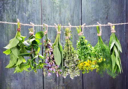 Photo for Set of fresh herbs hanging  over wooden vintage background - Royalty Free Image