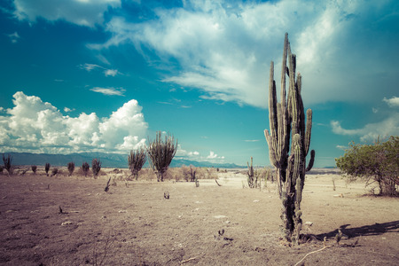 big cactuses in red desert, tatacoa desert, columbia, latin america, clouds and sand, red sand in desert