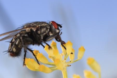 Mouche sur fleur juin