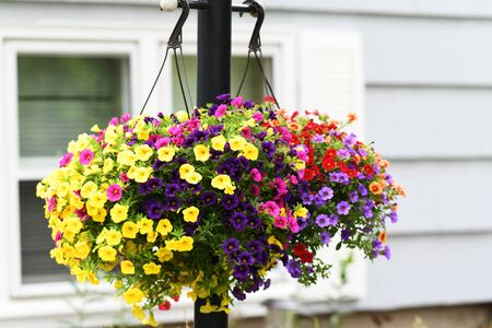 Photo pour blooming flower hanging on lamp pole in front of the house - image libre de droit