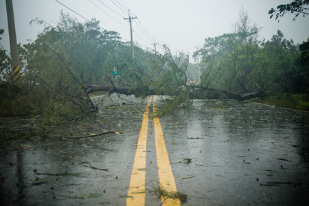 Photo pour Uprooted tree blocking road during a typhoon - image libre de droit