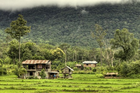 Rice Fields at Bolaven Plateau in Southern Laos