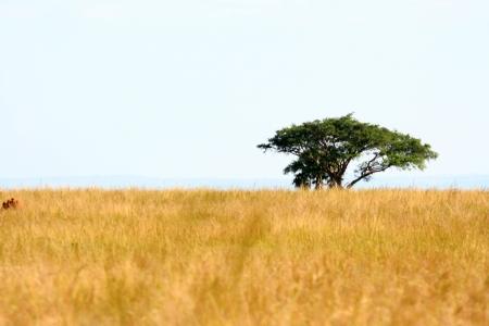 Savannah at Murchison Falls National Park Safari Reserve in Uganda - The Pearl of Africa