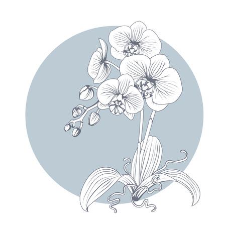 Illustration pour Hand drawn sketch orchid flower. Phalaenopsis contour image. Black and white with line art illustration. - image libre de droit