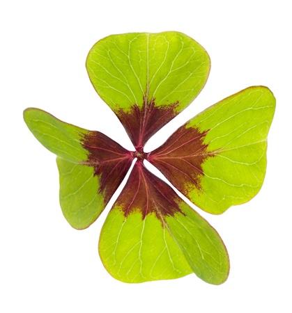Four leaf clover  symbol of good luck