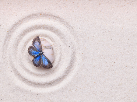A blue vivid butterfly on a zen stone with circle patterns on the white grain sand