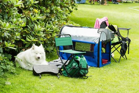 White samoyed dog resting at camp site al alone.