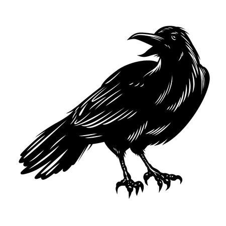 Illustration pour Black raven isolated on white - image libre de droit