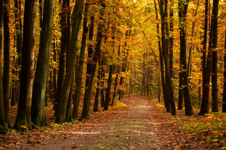 Beautiful forest landscape in autumn time with colorful leaves, nice path and sunlight