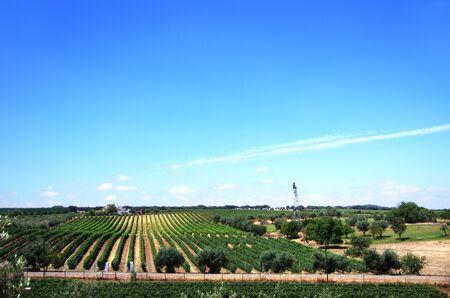 Foto für vineyard in farm at south of Portugal - Lizenzfreies Bild