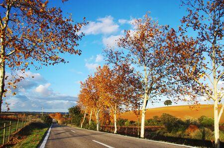 Photo pour autumn road at south of Portugal - image libre de droit
