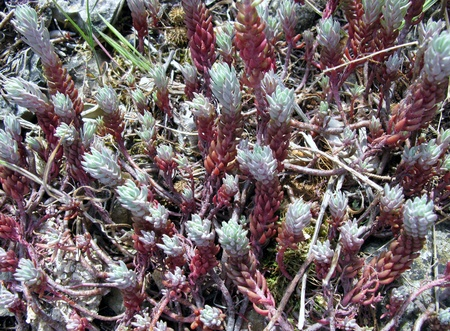 Colorful mosses