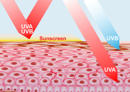 Sunscreen Lotion on Skin Protection from UVA , UVB rays - Vector Illustration