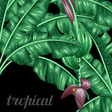 Illustration pour Background with banana leaves. Decorative image of tropical foliage, flowers and fruits. Design Image for advertising booklets, banners, flayers, cards. - image libre de droit