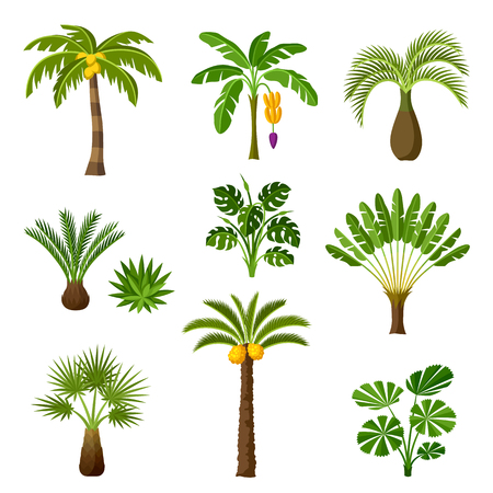 Illustration for Tropical palm trees set. Exotic tropical plants Illustration of jungle nature. - Royalty Free Image