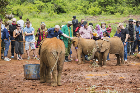 NAIROBI - DECEMBER 18: Tourists stroking baby elephants in the elephant orphange in Nairobi, Kenya on December 18, 2015