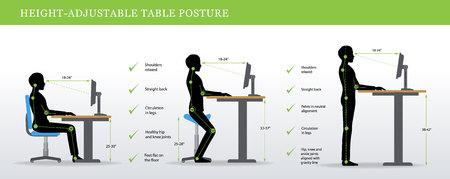 Illustration pour Height Adjustable and Standing Desks correct poses. Ergonomics healthy postures. - image libre de droit