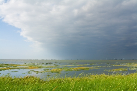 Salt marsh at the coast of Nordfriesland, Germany