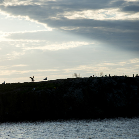 Silhouette  of a Flock of birds at Lake Of The Woods, Ontario, Canada