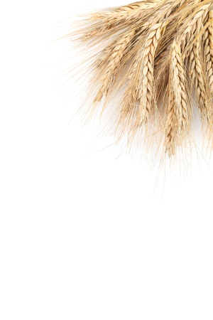 Barley frame isolated on white background with copy space