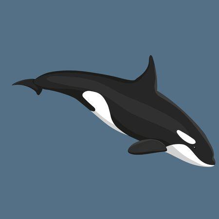 Illustration pour Vector Illustration Of Killer Whale Swims Isolated - image libre de droit