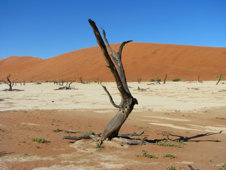 Dead trees and red dune in Deadvlei (Death valley), Sossusvlei, Namib-Naukluft National Park of Namibia
