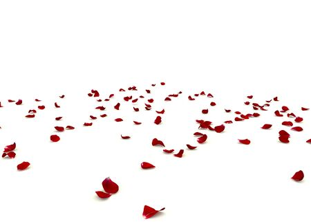 Photo for Rose petals are scattered on the floor. Isolated white background - Royalty Free Image