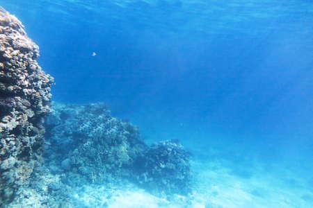 Photo pour Background of underwater landscape with coral reef. Depth of blue sea. - image libre de droit