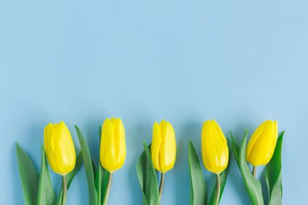 Photo pour Tender yellow tulips on pastel blue background. Greeting card for Mother's day. Flat lay. Place for text.  - image libre de droit