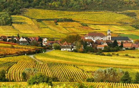 Autumn Vineyard in France