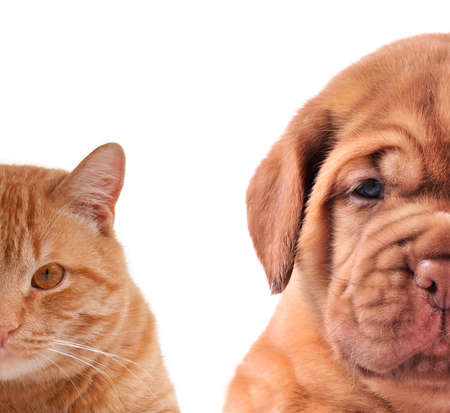 Cat and Dog - half of muzzle close up portraits isolated on white