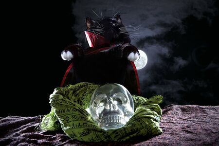 Photo pour Cute black cat wearing a cape costume for Halloween posing with a crystal skull on a foggy background. - image libre de droit