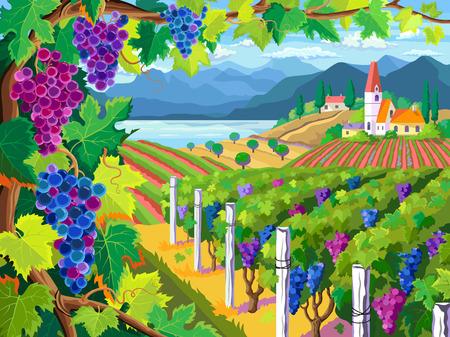 Illustration pour Rural landscape with vineyard and grapes bunches - image libre de droit