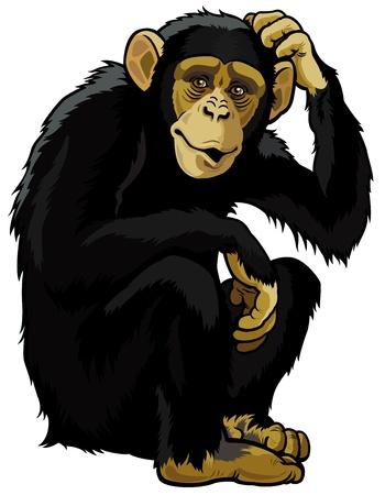 Illustration pour monkey chimpanzee,simia troglodytes,sitting pose,picture isolated on white background - image libre de droit