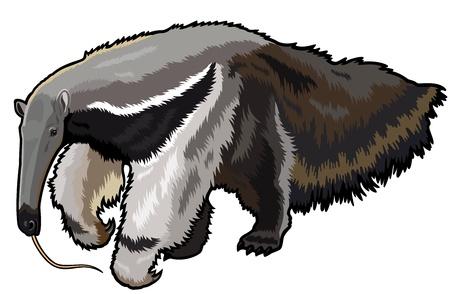 Illustration pour giant anteater,myrmecophaga tridactyla,wild animal of amazon rain forest,picture isolated on white background - image libre de droit