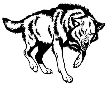 wolf,canis lupus,attacking pose,black and white isolated picture