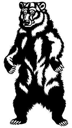 grizzly bear stand up pose,black and white front view picture