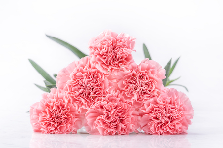Photo for Top view of elegance blooming sweet pink color tender carnations isolated on bright white background with card, may mothers day mum greeting design concept, close up, copy space - Royalty Free Image