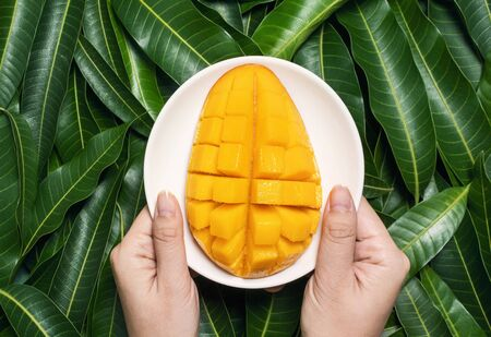 Photo pour Woman hold chopped fresh juicy beautiful mango over green leaves background. - image libre de droit