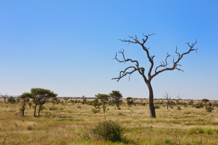 Savanna, Bushveld scene in South Africa