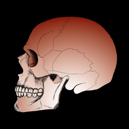 drawing of human skull sketch on the black background