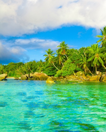 Dream Shore Palms