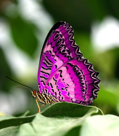 pink butterfly on leaf