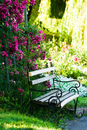 bench in the garden with roses