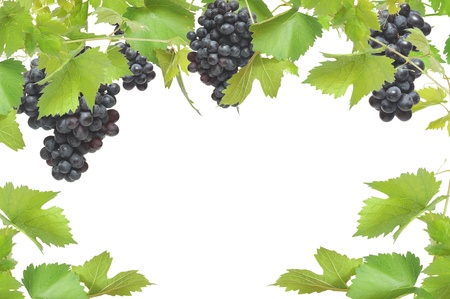Fresh grapevine frame with black grapes, isolated on white background