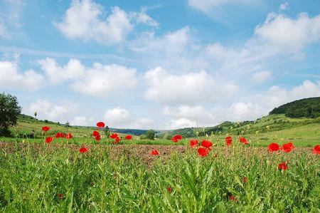 Photo pour cloudy blue sky and field with poppies - image libre de droit