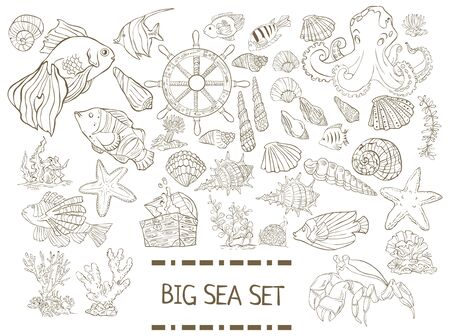 Big sea set. Collection of hand drawn fish, seaweed, octopus, jellyfish,shells isolated on white backgroundのイラスト素材