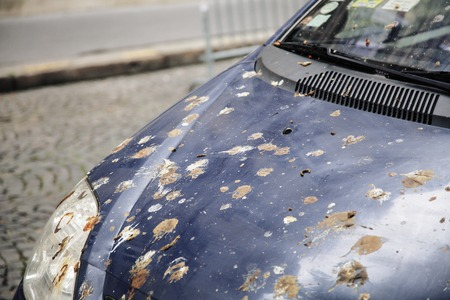 hood of car with lot of bird droppings, bad parking concept close up